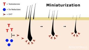 Miniaturization: The Mechanism in Genetic Balding